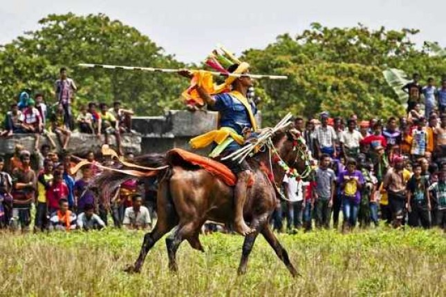 Sumba NTT Tenun Ikat, and 1001 sandelwood Horse Event