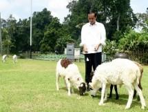 Presiden Jokowi; Industri Peternakan Harus Digarap dari Hulu ke Hilir