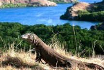 Taman Nasional Komodo (Foto Dok Industry.co.id)