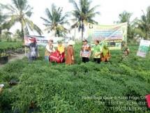 Panen Raya Cabai di Kulon Progo Siap Amankan Pasokan (Foto Dok Industry.co.id)