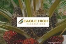 Eagle High Plantations