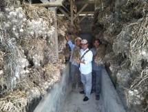Cianjur Penyangga Benih Bawang Putih Jawa Barat (Foto Dok Industry.co.id)