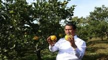 Mentan Amran Andi Sulaiman di panen jeruk