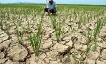lustrasi lahan pertanian kekeringan (Foto Ist)